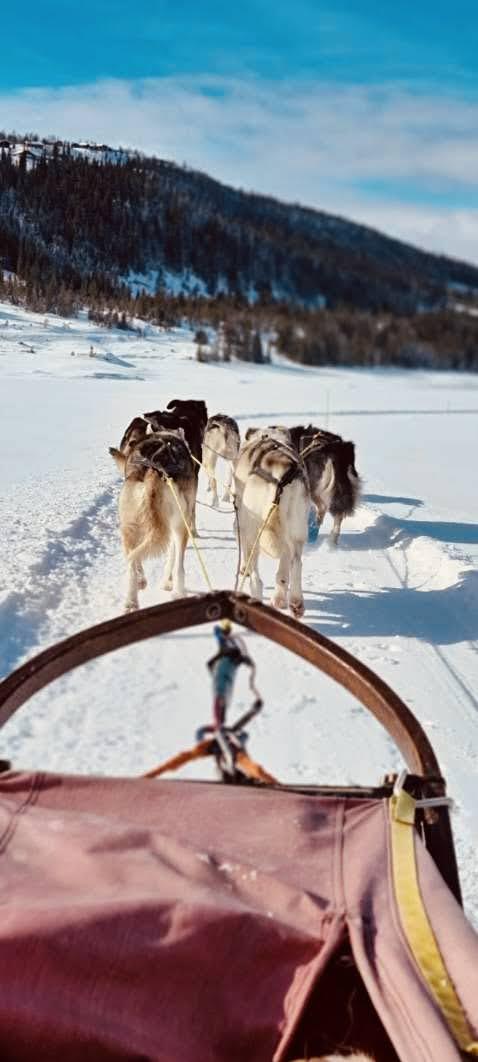 Hundekjøring